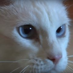 Coupe du Monde 2018 : Achille, ce chat sourd est le nouveau Paul le poulpe 🐱⚽