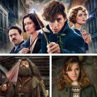 Les Animaux Fantastiques 3 : Hagrid et Hermione dans la suite de la franchise ?