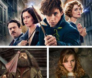 Les Animaux Fantastiques 3 : Hagrid et Hermione bientôt dans la suite de la franchise ?
