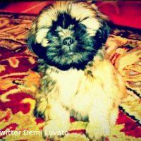 Demi Lovato ... Son nouveau chien est déjà une star sur Twitter