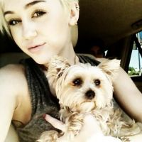 Miley Cyrus - Enfin une good news : son chien va mieux ! (PHOTO)