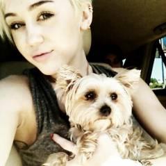 Miley Cyrus - Enfin une good news : son chien va mieux ! (PHOTO)