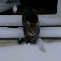 LOLcat :  Fletcher le chat découvre la neige
