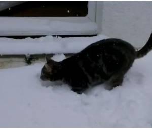 Fletcher VS la neige, un combat sans fin