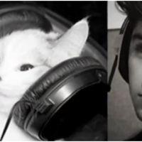One Direction : la vidéo de leurs sosies en mode... chats !
