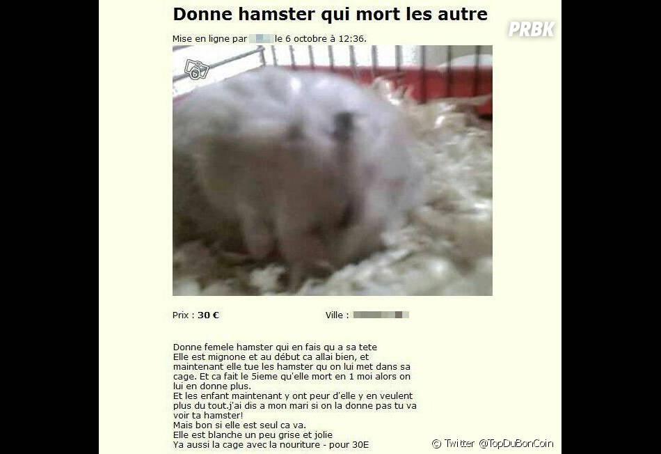"""Sur le Bon, on peut même trouver un """"hamster qui mort les autres"""""""