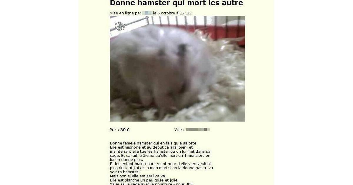 sur le bon on peut m me trouver un hamster qui mort les autres. Black Bedroom Furniture Sets. Home Design Ideas