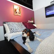Vienne : des chambres d'hôtel de luxe pour les chiens
