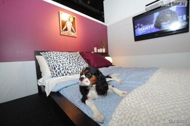vienne des chambres d 39 h tel de luxe pour les chiens. Black Bedroom Furniture Sets. Home Design Ideas