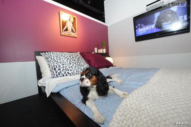Un hôtel propose des chambre pour les chiens