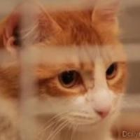 Il met son chat au micro-ondes : bad buzz scandaleux mais happy end