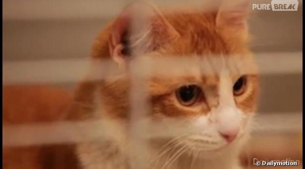 BousBous, le chat mis dans un micro-onde par son maître