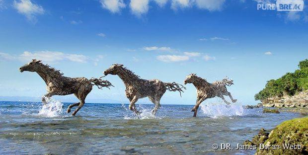 Des chevaux sculptés dans du bois flotté