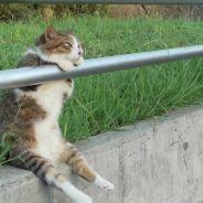 [GIFS] 15 chats qui passent une journée plus pourrie que la vôtre