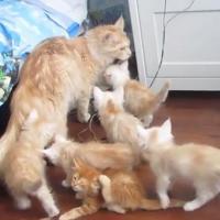 [VIDEO] Comment se débarrasser de ses enfants ? Cette chatte a la solution
