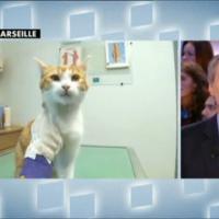 Oscar le chat torturé : 1eres interviews trop miaou pour le miraculé