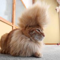 """[VIDEO] """"Mohawk cat"""", le chat tout droit sorti des années 1980"""