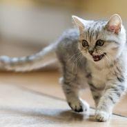 Il tue un chat à coups de pied, direction la case prison