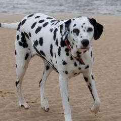 Un chien témoin principal d'une affaire de meurtre : une histoire de woof !