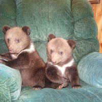 [PHOTOS] Ces deux oursons adoptés sont la chose la plus mignonne de la journée