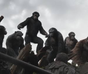 La Planète des singes 2 : le troisième film sera une suite directe