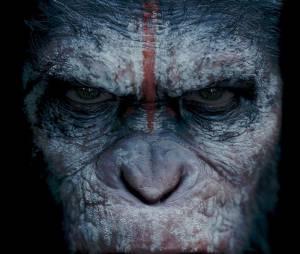 La Planète des singes 2 : César toujours au centre de la suite