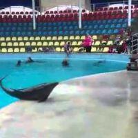 Ce dauphin joue avec un enfant et prouve qu'il est le meilleur ami de l'homme