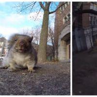 Un écureuil vole une GoPro et trolle son proprio