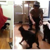 La réaction de ces chats face au retour de leurs maîtres est totalement ingrate !