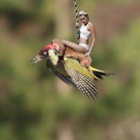 La belette et le pivert : les meilleurs détournements de la photo qui a fait le tour du web