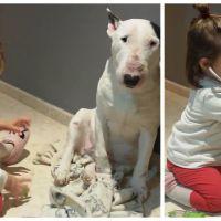Craquant : une petite fille joue au docteur avec son Bull Terrier tout gentil et patient