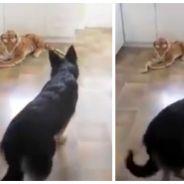 Trop mignon : un chien complètement paniqué à cause... d'une peluche !