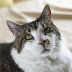 L'Australie veut tuer deux millions de chats... mais pour une bonne raison