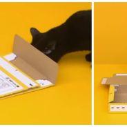 Un chat monte une boite en carton tout seul avec ses petites pattes. La pub japonaise drôle et cute