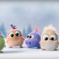 Angry Birds le film : découvrez les Hatchlings, les nouvelles créatures craquantes