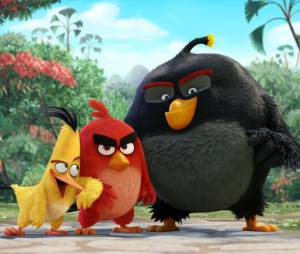 Angry Birds le film : Red, Chuck et Bomb au programme