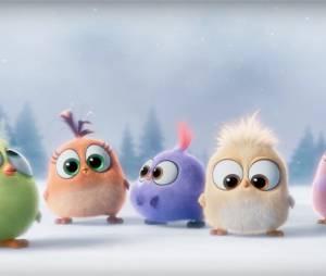 Angry Birds le film : les Hatchlings se dévoilent