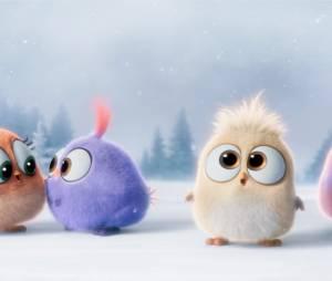 Angry Birds le film : les Hatchlings, nouvelles créatures trop mignones
