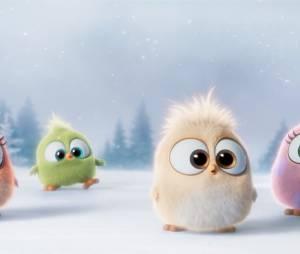 Angry Birds le film : les Hatchlings, les nouvelles créatures trop mignones
