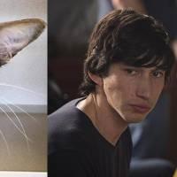 Le chat sosie d'Adam Driver en Kylo Ren a été adopté