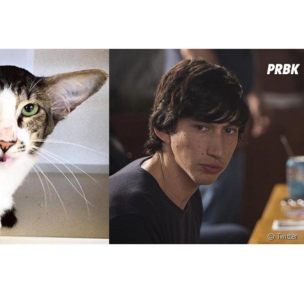 Corey, le chat sosie d'Adam Driver (alias Kylo Ren), a fait marrer Twitter