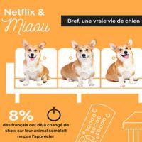 Les animaux, meilleurs compagnons pour binge watcher sur Netflix selon cette étude