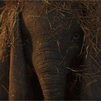 Dumbo : une première bande-annonce magique du remake du film Disney