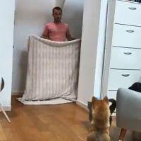 #WhatTheFluffChallenge : le nouveau défi qui affole les chiens, même Squeezie l'a fait