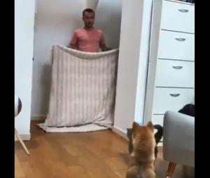 #WhatTheFluffChallenge : le nouveau défi qui affole les chiens... et la Toile