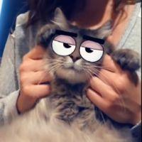 Snapchat : les chats ont leurs propres filtres, ça fait ronronner de plaisir leurs propriétaires !