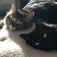Ces deux chats vivent dans leur propre appartement (à 1.500$/mois), sans humain