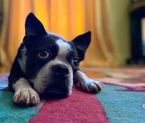 iPhone 11 : les photos boostées avec de nouveaux modes portrait et la reconnaissance des animaux