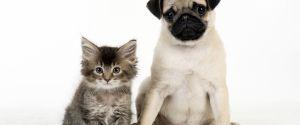 Suite à la crise du Coronavirus en Chine, à Shenzhen on ne pourra plus manger de chien ou de chat