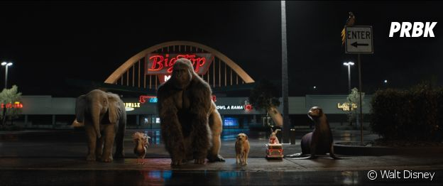 Le seul et unique Ivan : 4 bonnes raisons de voir le film sur Disney+ (dispo dès ce vendredi 11 septembre 2020)